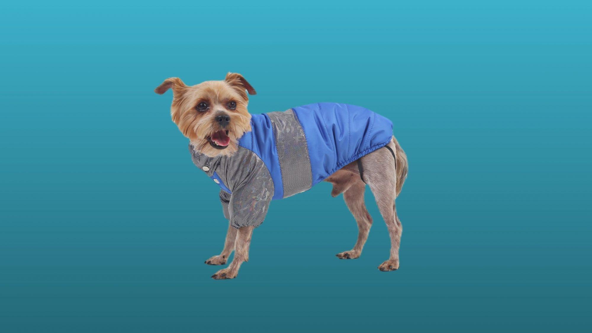 фотосъемка собачей одежды