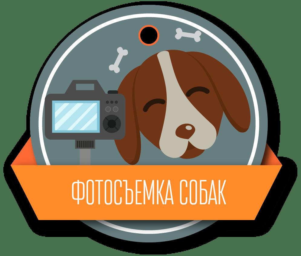 fotosemka-sobak-2x